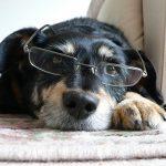 【夢占い】犬が出てきたときは男性を意味する?!吉なの凶なの?