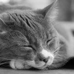 片思いで不眠・悪夢を見るときの対処法